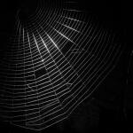 The_Dark_Web